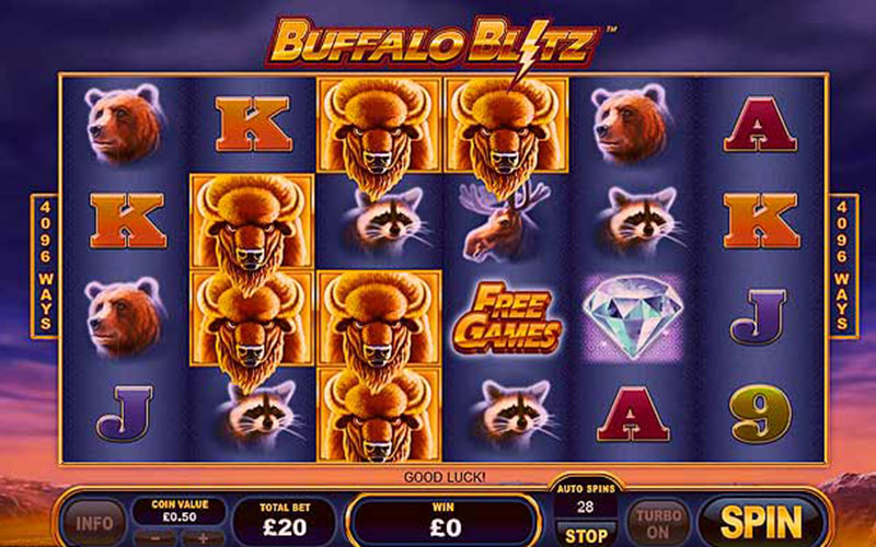 Những chú bò rừng trong Buffalo Bliz